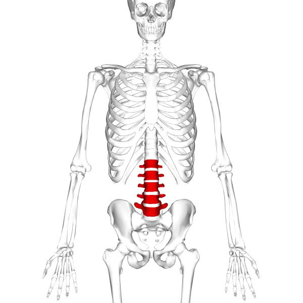 грыжа шморля поясничного отдела позвоночника симптомы