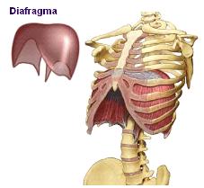грыжа пищеводного отверстия диафрагмы можно ли вылечить
