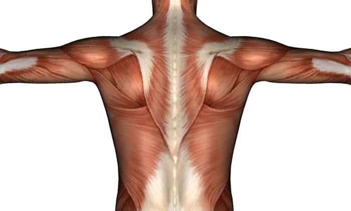 При регулярном выполнении упражнения способны укреплять мышцы спины