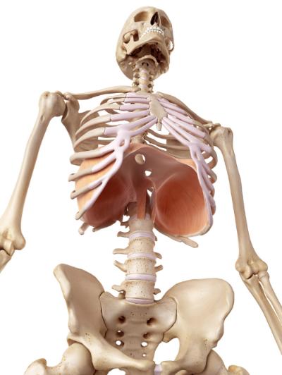 Лечение грыжи пищевода без операции: методы