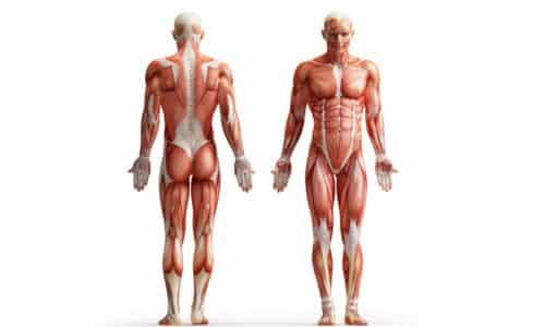 Кроме того, в ходе лечебных занятий тренируются мускулы брюшного пресса