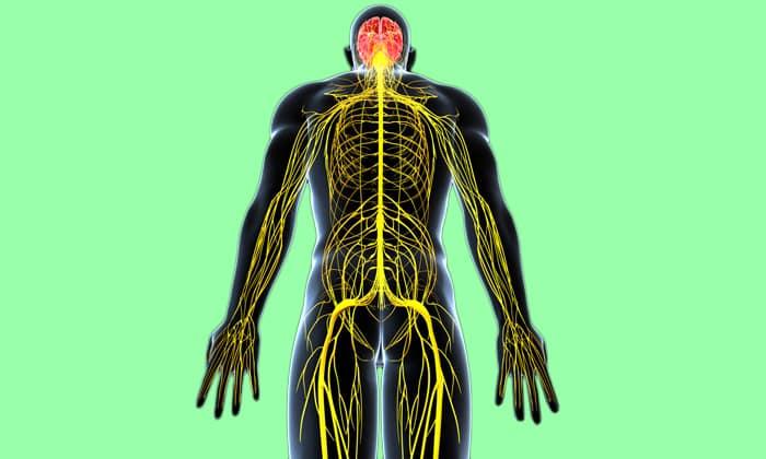 Тяжелые поражения центральной нервной системы являются противопоказанием к апитерапии