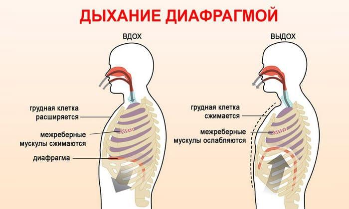 Диафрагмальное дыхание во время занятий повысит эффективность тренировки, уменьшит боли