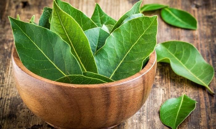 Для приготовления обезболивающего средства измельчают лавровые листья