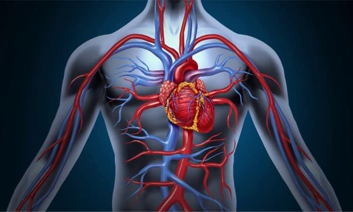 При занятиях на тренажере ускоряется кровоток в организме